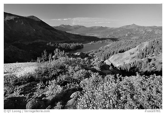 Flowers and Red Lake in the distance, afternoon. Mokelumne Wilderness, Eldorado National Forest, California, USA (black and white)