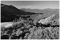 Flowers and Red Lake in the distance, afternoon. Mokelumne Wilderness, Eldorado National Forest, California, USA ( black and white)