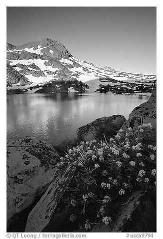 Flowers, Winnemucca Lake,  and Round Top Peak, sunrise. Mokelumne Wilderness, Eldorado National Forest, California, USA (black and white)