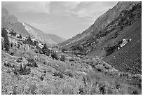 Valley with fall colors, Lundy Canyon, Inyo National Forest. California, USA ( black and white)