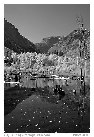 Pond and trees in autumn, Lundy Canyon, Inyo National Forest. California, USA (black and white)