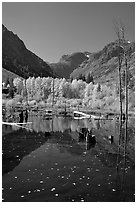 Pond and trees in autumn, Lundy Canyon, Inyo National Forest. California, USA ( black and white)