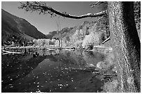 Pond and trees in fall colors, Lundy Canyon, Inyo National Forest. California, USA ( black and white)