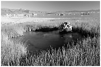 Grasses and spring with small tufa being formed underwater. Mono Lake, California, USA ( black and white)