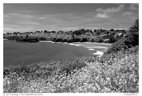 Spring wildflowefrs and Ocean, town on a bluff. Mendocino, California, USA (black and white)