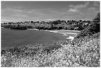 Spring wildflowefrs and Ocean, Mendocino in the background. California, USA (black and white)