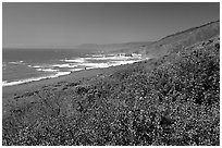 Purple wildflowers and Ocean near Fort Bragg. California, USA (black and white)