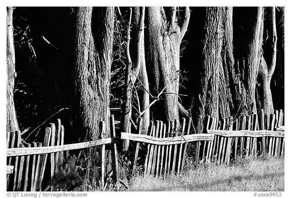 Old fence and trees, late afternoon. California, USA (black and white)