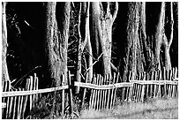 Old fence and trees, late afternoon. California, USA ( black and white)