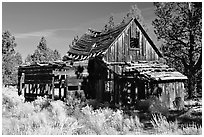 Abandoned wooden cabin. California, USA ( black and white)