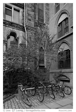 Redbud and bicycles in building corner. Yale University, New Haven, Connecticut, USA (black and white)