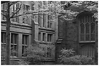 Old Campus buildings. Yale University, New Haven, Connecticut, USA (black and white)