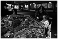 Tidepool exhibit, Mystic aquarium. Mystic, Connecticut, USA (black and white)