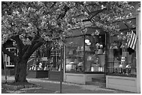 Lamp store and tree in bloom,	Old Saybrook. Connecticut, USA ( black and white)