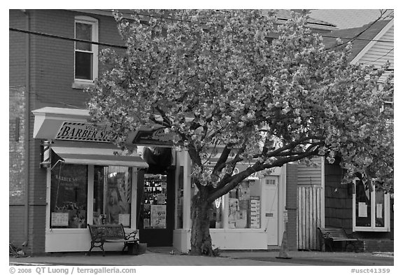 Stores and tree in bloom, Old Lyme. Connecticut, USA (black and white)