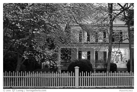 White picket fence, dogwoods, and house at dusk, Old Lyme. Connecticut, USA (black and white)