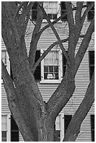 Tree and facade, Hawkes House, Salem Maritime National Historic Site. Salem, Massachussets, USA ( black and white)