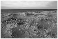Dune grass, late afternoon, Race Point Beach, Cape Cod National Seashore. Cape Cod, Massachussets, USA ( black and white)