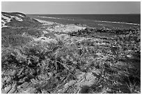 Vegetation on tall dune, Cape Cod National Seashore. Cape Cod, Massachussets, USA (black and white)