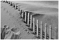 Sand, fence, and animal tracks, Cape Cod National Seashore. Cape Cod, Massachussets, USA (black and white)