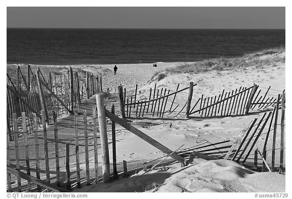 Sand Fence, tourist, and ocean late afternoon, Cape Cod National Seashore. Cape Cod, Massachussets, USA (black and white)