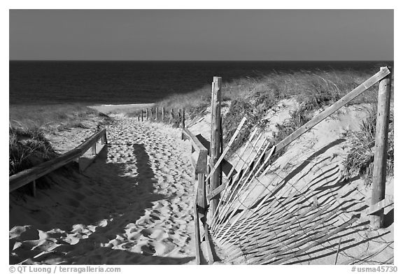 Path to beach and ocean framed by sand fences, Cape Cod National Seashore. Cape Cod, Massachussets, USA (black and white)