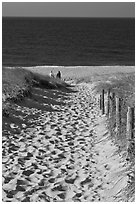 Path to ocean through dunes and tourists, Cape Cod National Seashore. Cape Cod, Massachussets, USA (black and white)
