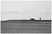 Flock of birds and Race Point Light, Cape Cod National Seashore. Cape Cod, Massachussets, USA (black and white)