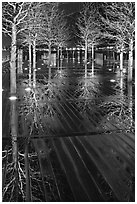 Reflected trees at night. Boston, Massachussets, USA ( black and white)