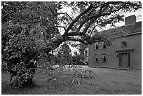 Tree and Samuel Brooks House, Minute Man National Historical Park. Massachussets, USA ( black and white)