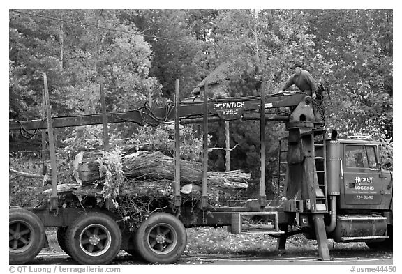 Tree pruning truck, Rockwood. Maine, USA (black and white)