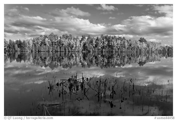 Reeds and autumn trees reflected in still pond, Greenville Junction. Maine, USA (black and white)
