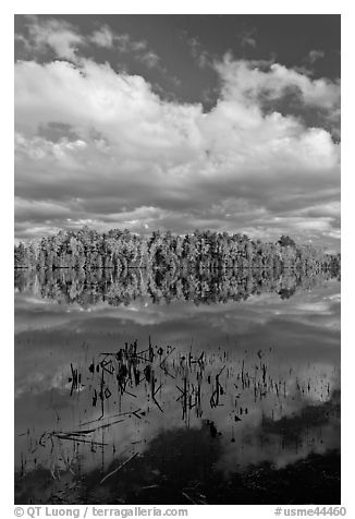 Reeds, autumn reflections, and cloud, Greenville Junction. Maine, USA (black and white)