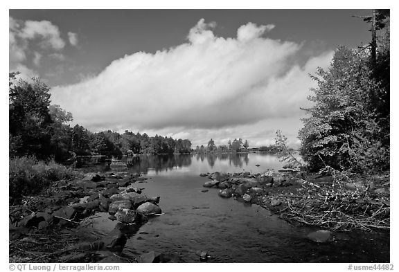 Stream, trees in fall color, Beaver Cove. Maine, USA (black and white)