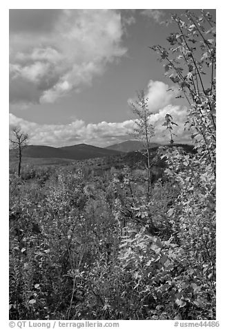 Colorful leaves framing fall landscape. Maine, USA (black and white)