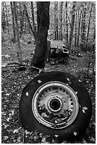 Wheel and fuselage part from crashed B-52 in forest. Maine, USA ( black and white)