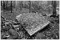 Pieces of B-52 wreckage lie scattered on Elephant Mountain. Maine, USA ( black and white)