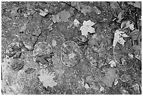 Detail of B-52 airplane part with fallen leaves. Maine, USA ( black and white)