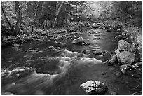 Stream in autumn near Elephant Mountain. Maine, USA ( black and white)