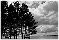 Conifers silhouette and clouds, Lily Bay State Park. Maine, USA ( black and white)