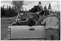 Hunters and tagged moose in back of truck, Kokadjo. Maine, USA (black and white)