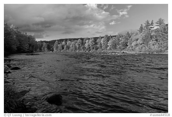 Fast-flowing Penobscot River and fall foliage. Maine, USA (black and white)
