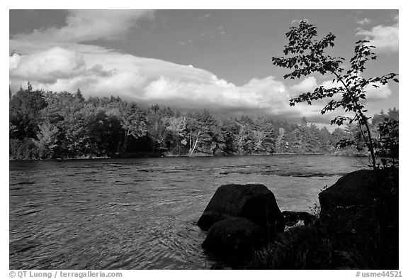 Penobscot River, boulders, and trees in fall. Maine, USA (black and white)