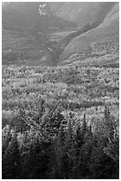 Forested slopes of Mount Katahdin. Baxter State Park, Maine, USA ( black and white)
