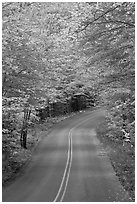 Road near entrance of Baxter State Park, autumn. Baxter State Park, Maine, USA ( black and white)