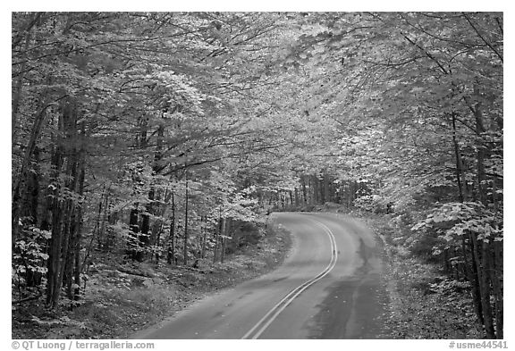 Fall foliage and road near entrance of Baxter State Park. Baxter State Park, Maine, USA (black and white)
