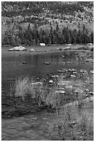 Reeds and mountain slope, Sandy Stream Pond. Baxter State Park, Maine, USA (black and white)