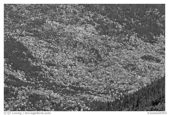 Katahdin mountain slopes colored with fall foliage. Baxter State Park, Maine, USA (black and white)