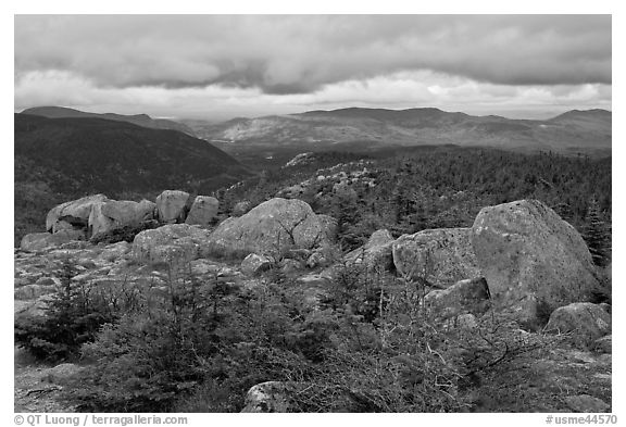 Evergreens and boulders on summit of South Turner Mountain. Baxter State Park, Maine, USA (black and white)