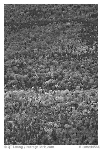 Aerial view of forest in autumn. Baxter State Park, Maine, USA (black and white)